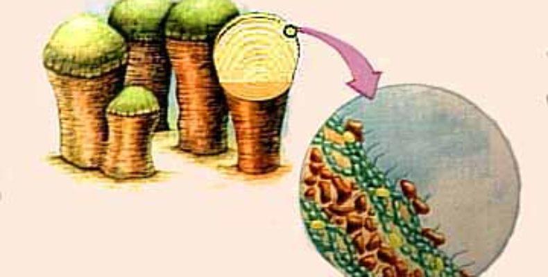 Estromatolitos: La vida microscópica invisible a nuestros ojos